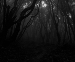 night, scary, and trees image