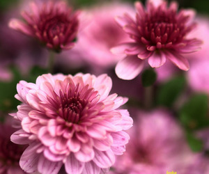 beautiful, flowers, and colors image