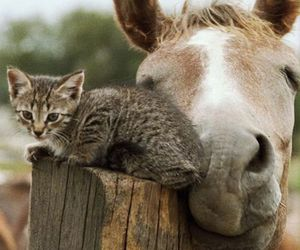 cat and horse image