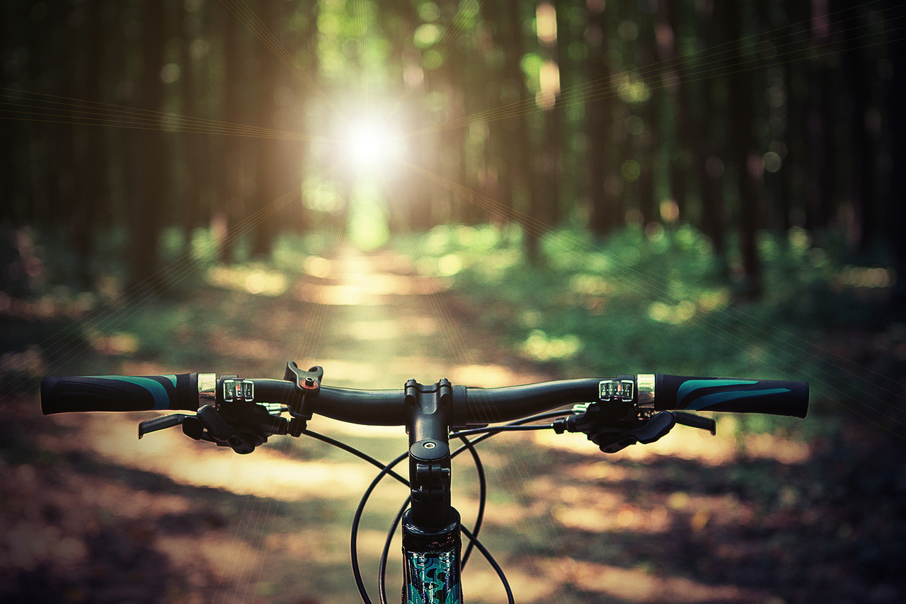 autumn, biking, and forest image