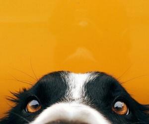 dog and fun image