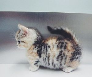 cat, cats, and cute. kittens image