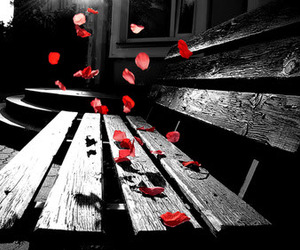 bench, photography, and red image