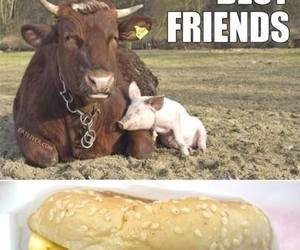 funny, cow, and pig image