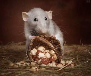 baby animals, cute animals, and rats image