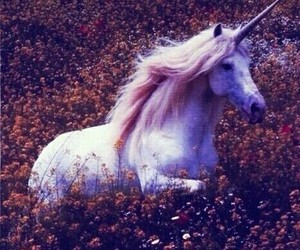 pretty, unicorn, and unicorns image