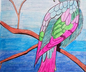 colours, drawings, and parrot image