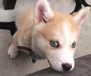 baby, dog, and husky image