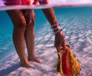 summer, sea, and shell image
