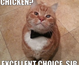 cat macro, fancy cat, and good day sir image