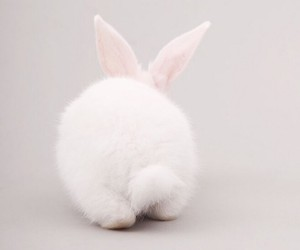 rabbit, white, and cute image