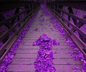 purple and nature image