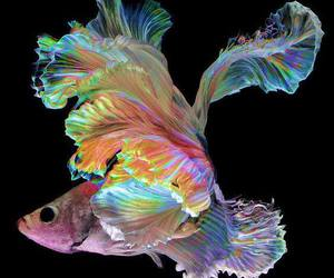 fish, rainbow, and colourful image