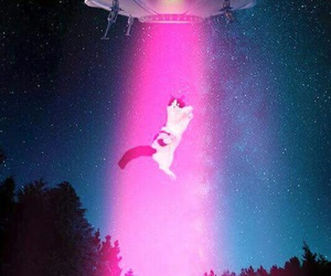 cat, pink, and space image