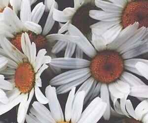 flowers, header, and cute image