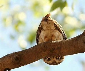 owl and what is happening there? image
