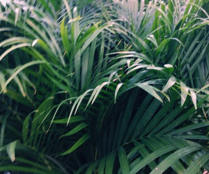 green, palm, and nature image