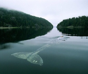 whale, nature, and water image