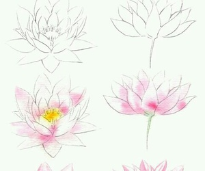 how to draw, step by step, and water lily image