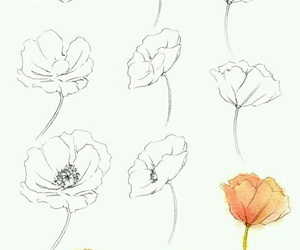 poppies, como dibujar, and step by step image