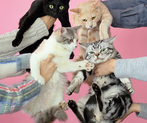 cats, cute, and pin image