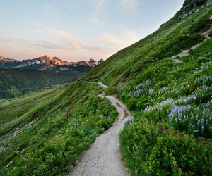 nature, mountains, and flowers image