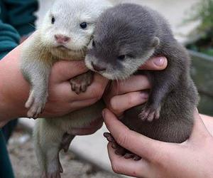 baby animal, otters, and cute image