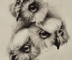 art, owls, and drawings image