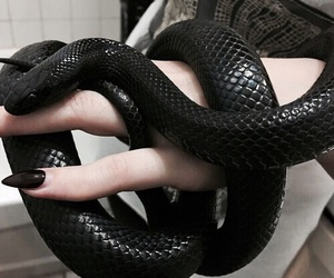 snake, black, and nails image