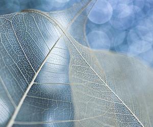 fragile, skeleton leaves, and joanna rzeznikowska image