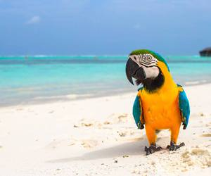 beach, parrot, and sand image