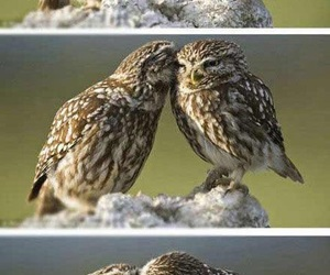 animals, beautiful, and owls image