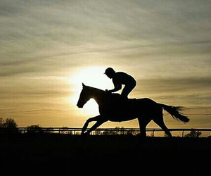 horse, sun, and thoroughbred image