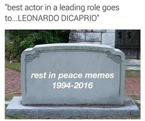 funny, leonardo dicaprio, and meme image