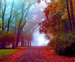 autumn, photography, and love image