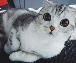 cat, animal, and кот image