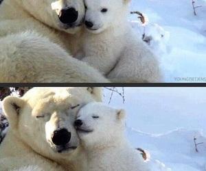 love, bear, and Polar Bear image