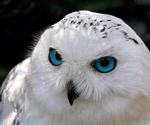 bird, owl, and blue image