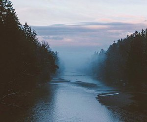nature, tree, and dark image