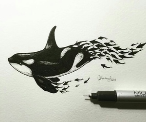 fish, animal, and art image