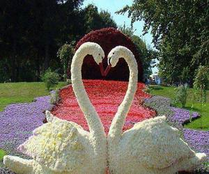 Swan, flowers, and heart image