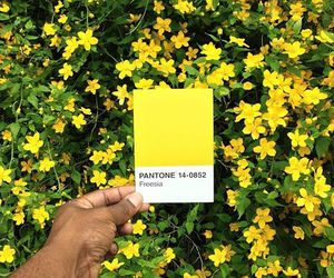 pantone, flowers, and yellow image