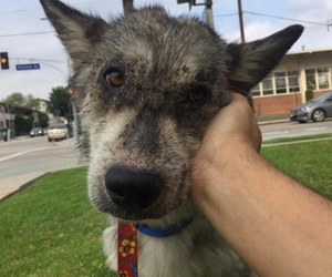 adoption, thankful, and animals image