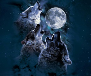 wolf, moon, and animal image