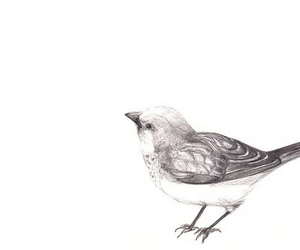 bird and drawing image