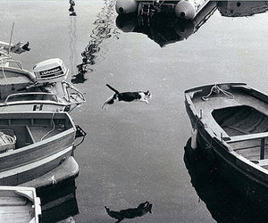 boat, cat, and black and white image