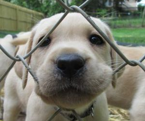 dog, cute, and animals image