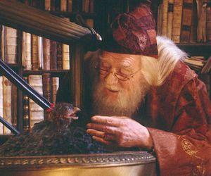 harry potter, dumbledore, and phoenix image