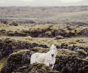 horse, nature, and white image