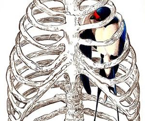 bird, bones, and drawing image